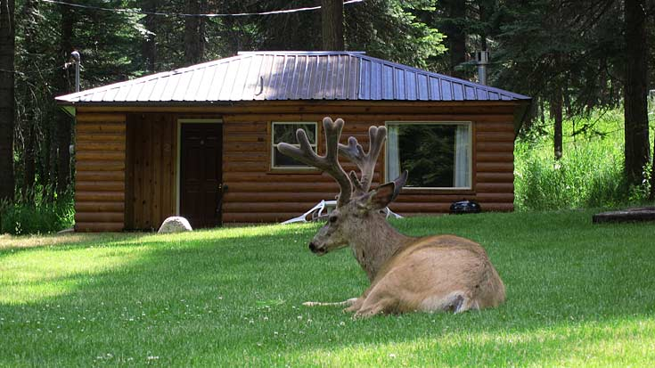 EC Cabin with Deer