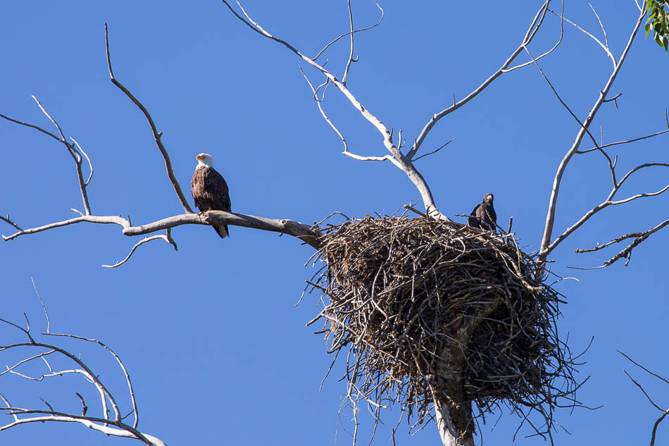 eagles nest wallowa lake